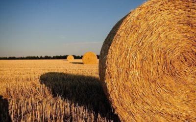 Sept ans d'accompagnement du Groupe Agrica sur SAP BusinessObjects